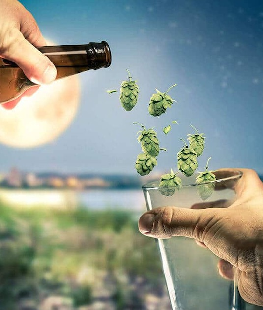 Servindo lúpulo no copo de cerveja