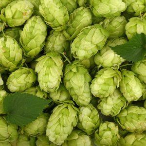 hops-cones